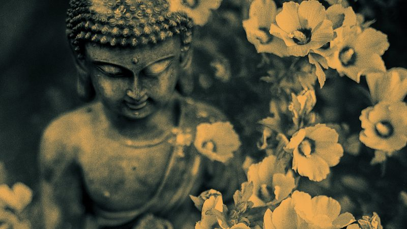 Photo of Buddha statue among hibuscus blooms